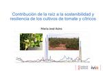 Contribución de la raíz a la sostenibilidad y resiliencia de los cultivos de tomate y cítricos