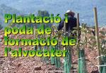 Plantació i poda de formació de l'alvocater