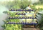 Maquinaria para tratamientos fitosanitarios