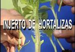 Injerto de hortalizas